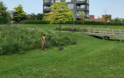 Voorbeeld van een verhoogde bloemenweide en graswadi ernaast van NLBloeit