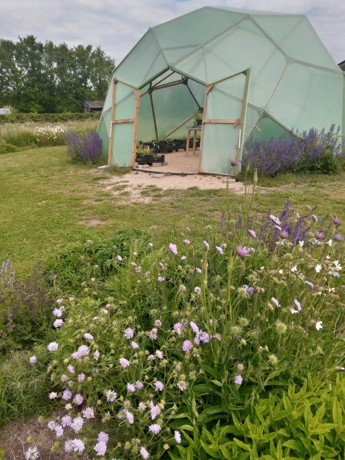 Hier worden de bloemen gekweekt